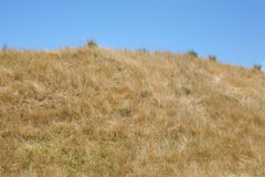 Sun bleached dry hillside. Grassy hillock parched dry by the New Zealand sunlight in summer royalty free stock photo