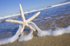 Sun Bleached Starfish Royalty Free Stock Images