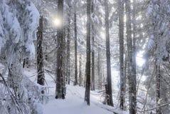 Sun-Blinzeln über geschneitem Wald Lizenzfreies Stockfoto