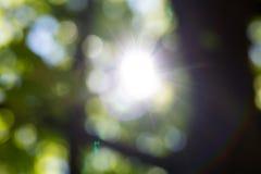Sun blitzt durch die Bäume Lizenzfreie Stockfotos
