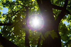 Sun blitzt durch die Bäume Stockfoto
