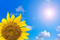 Sun blomma i blå sky Arkivfoton