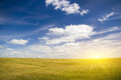 The sun in blue sky above of floral meadow. Royalty Free Stock Image