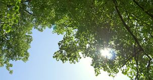 Sun On Blue Sky Visible Through Green Trees stock footage