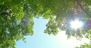Sun On Blue Sky Visible Through Green Trees stock video footage