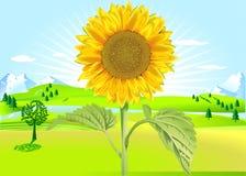 Sun-Blume am Sommer lizenzfreie abbildung