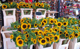 Sun-Blumen Lizenzfreie Stockfotografie