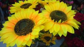 Sun-Blumenanlage lizenzfreies stockfoto