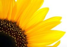 Sun-Blumenhintergrund Stockbild