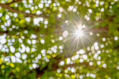 Sun bokeh tree Stock Photos