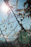 Sun through branch covered with ice on blue sky background. Sun through branch covered with snow with blue sky background. Icy edges can be seen on branches Royalty Free Stock Image