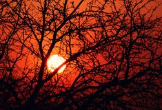 Sun through branches Royalty Free Stock Images