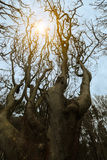 Sun between the branches Royalty Free Stock Photos