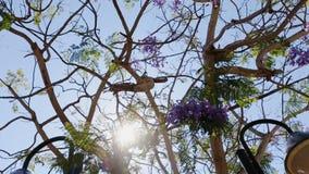 Sun through the branches stock video