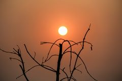 Sun and branches at sunset. royalty free stock photography