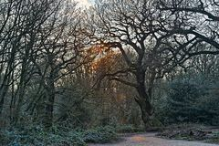 Sun breaking through bare trees onto woodland path Stock Image