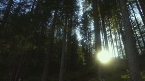 Sun breaking through pine trees in Dolomites forest, beautiful nature, Italy. Stock footage stock video