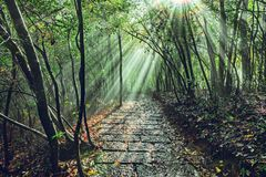 Sun breaks through the fog at morning time. Zhangjiajie Forest Park. China royalty free stock photo