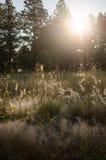 Sun breaks through Stock Photo