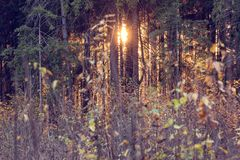 Sun breaks through the trees. Sun breaks through the trees at sunset time royalty free stock photos