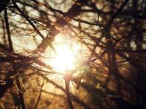 Sun brilha através das árvores A luz atravessa ramos sem as folhas Fotos de Stock