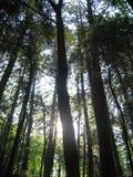 Sun brilla el throuh los árboles Imágenes de archivo libres de regalías