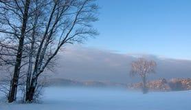Sun brilla en árbol solitario en niebla de la madrugada Foto de archivo libre de regalías