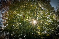 Sun brilla a través de árbol foto de archivo