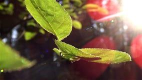 Sun brilla a través de las hojas almacen de metraje de vídeo