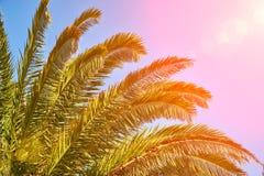 Sun brilla a través de las ramas de palmera imágenes de archivo libres de regalías