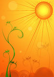 Sun brillant à la fleur Image stock