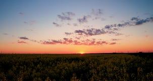 Sun brillant au lever de soleil de coucher du soleil au-dessus de l'horizon du Canola fleurissant de ressort, graine de colza, he banque de vidéos