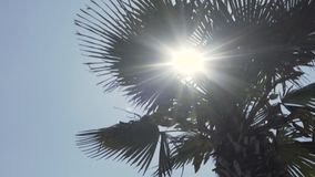 Sun brillant avec le palmier clips vidéos