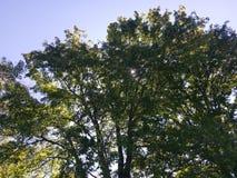 Sun brillant par des arbres Photographie stock libre de droits