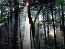 Sun brillant par des arbres Photos libres de droits