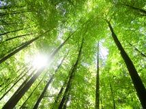 Sun brillant par des arbres Image libre de droits