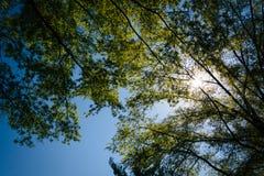 Sun brillant par des arbres en vallée de Shenandoah rurale de Virg Images libres de droits