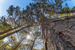 Sun brillant par des cimes d'arbre Photographie stock libre de droits