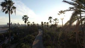 Sun brillant par des paumes dans l'agrafe de bourdon de Los Angeles banque de vidéos