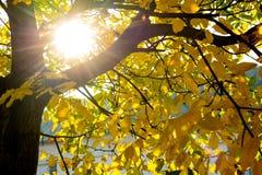 Sun brillant par l'arbre Image stock