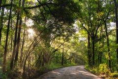 Sun brillant par la forêt en Caroline du Sud images libres de droits