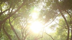 Sun brillant par le grand arbre banque de vidéos