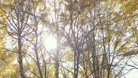 Sun brillant par le jaune laisse à automne d'or beau briller du soleil de fond banque de vidéos