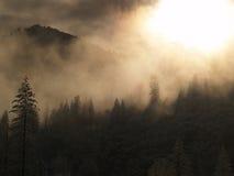 Sun brillant par les arbres Photo libre de droits