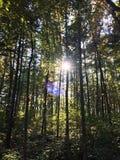 Sun brillant par les arbres Photo stock