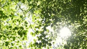 Sun brillant par les branches des arbres banque de vidéos