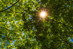 Sun brillant par les feuilles vertes Photo libre de droits