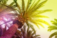 Sun brillant par les palmiers grands Photographie stock libre de droits