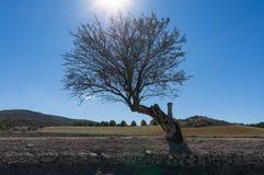 Sun brillant par un arbre en premier ressort Photo libre de droits