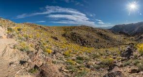 Sun brillante estallado sobre la floración del desierto Imagen de archivo libre de regalías